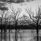 Trees in the lake by Brent Randall