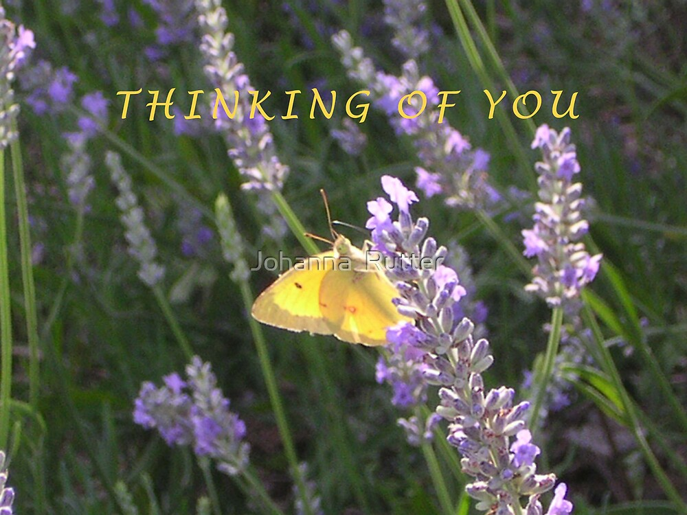 Thinking of you butterfly by Johanna  Rutter