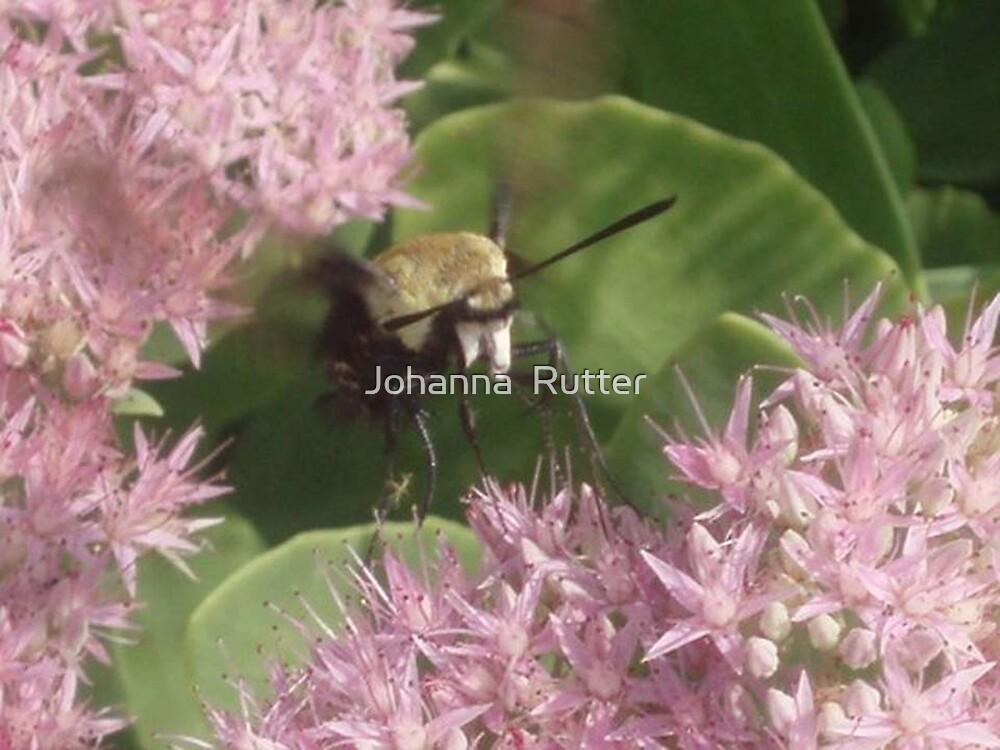 Bee on flower by Johanna  Rutter