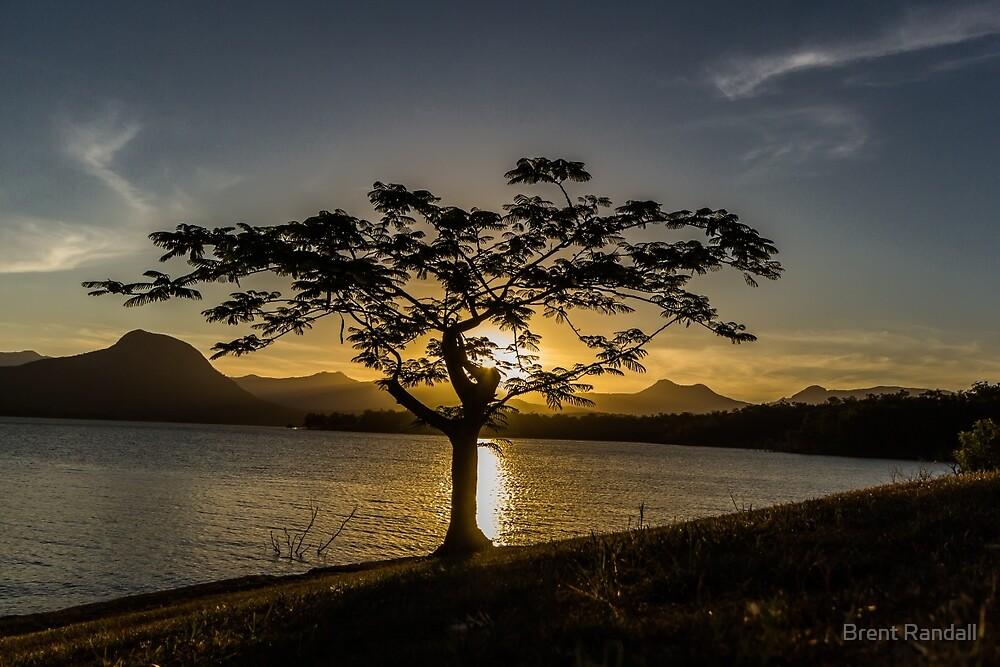 The Tree by Brent Randall