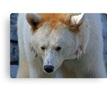 White Black Bear Canvas Print
