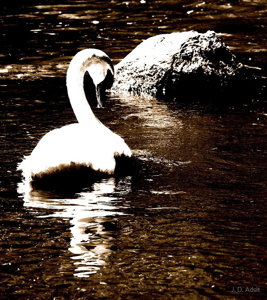 White Elegance by J. D. Adsit