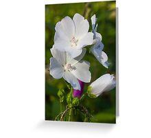 White jasmine flower Greeting Card