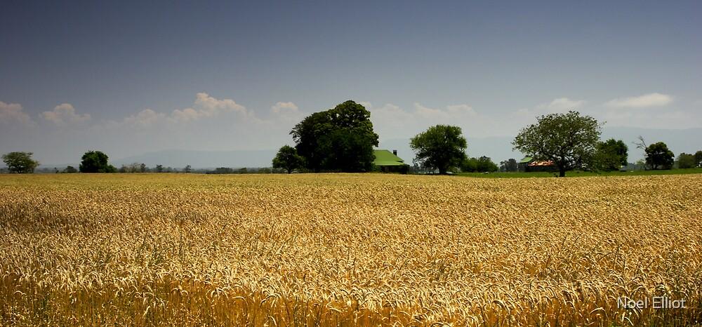 Golden Fields by Noel Elliot