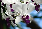 White And Purple Orchid by Dave Lloyd