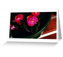 Pink Impatients Greeting Card