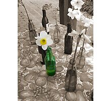 Bottles of Daffodils Photographic Print