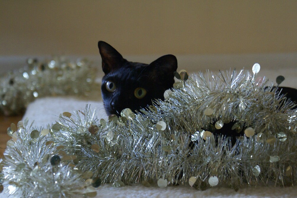 Christmas Cleo by Nigel Roulston