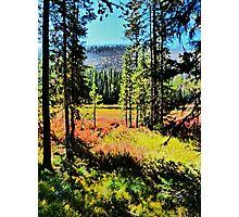 Autumn Cometh Photographic Print