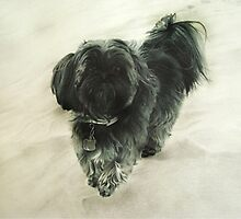 Portrait of Dog by Carrie Jackson
