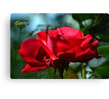 Red Rose ...... Canvas Print