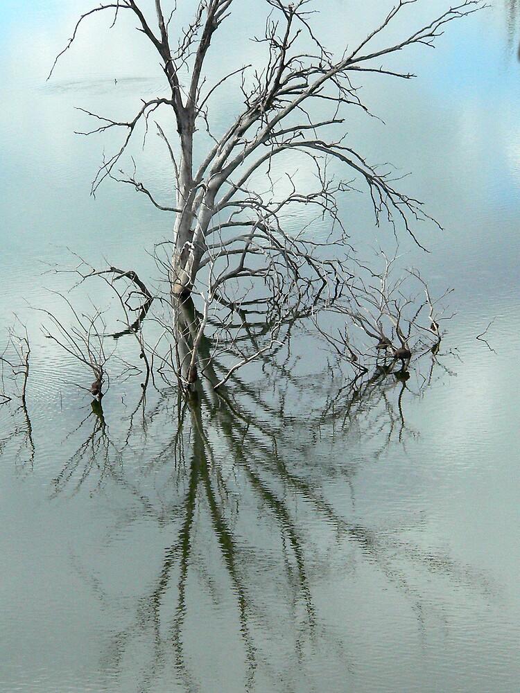 Windermere trees by farmmax