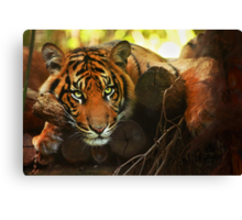Tiger - Model Canvas Print