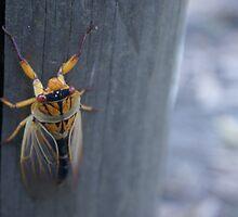 cicada by rebecca Lara bartlett
