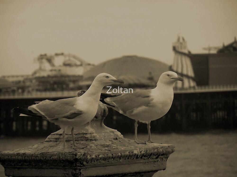 Seagulls  by Zoltan