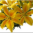 Yellow lilly by punch
