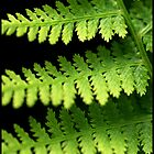 Fern Macro by Melody Shanahan-Kluth