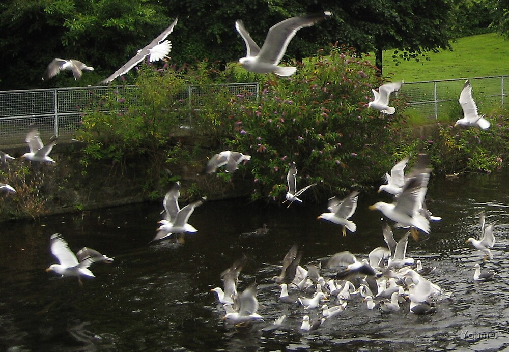 Seagulls over the Water of Leith, 4 by Yonmei