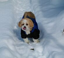 ☃ I LIKE THE TASTE OF SNOW☃ by ✿✿ Bonita ✿✿ ђєℓℓσ