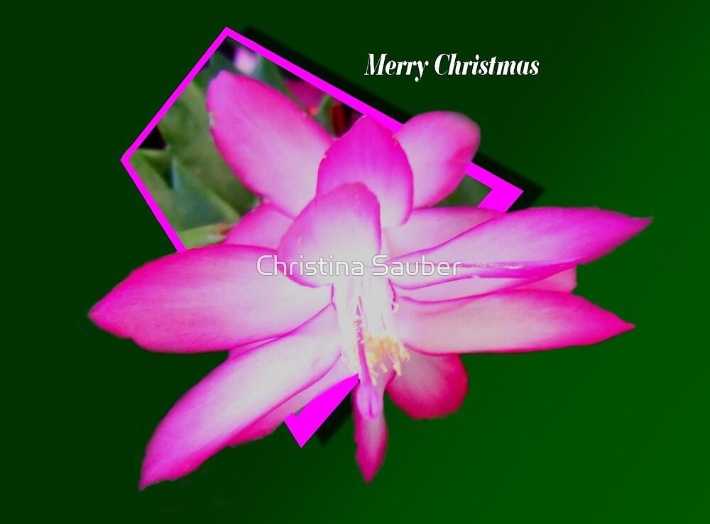 Christmas Card by Christina Sauber