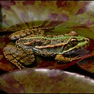 Frog by SWEEPER