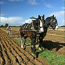 Horses Ploughing by SWEEPER