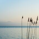 Reeds At The Lake by metriognome