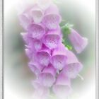 Pink Foxglove by punch