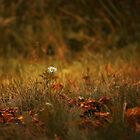 Single daisy with autumn leaves by Irina777