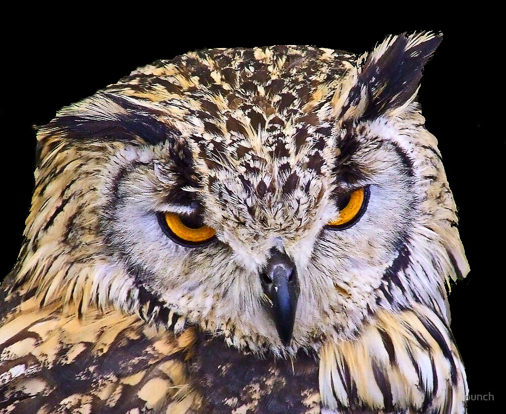 Owl by punch