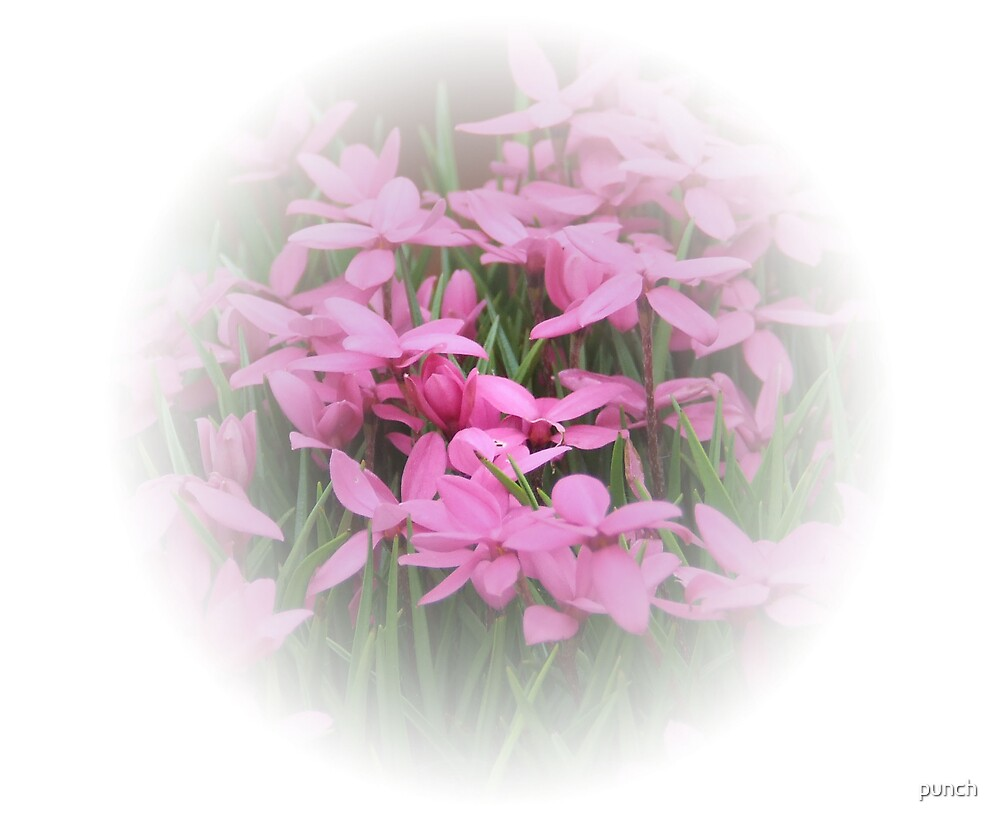 Soft Pink Flowes by punch