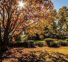 Autumn Tones by Brent Randall