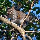 Squirrel Waving at Me by TJ Baccari Photography