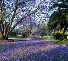 The purple carpet by Brent Randall