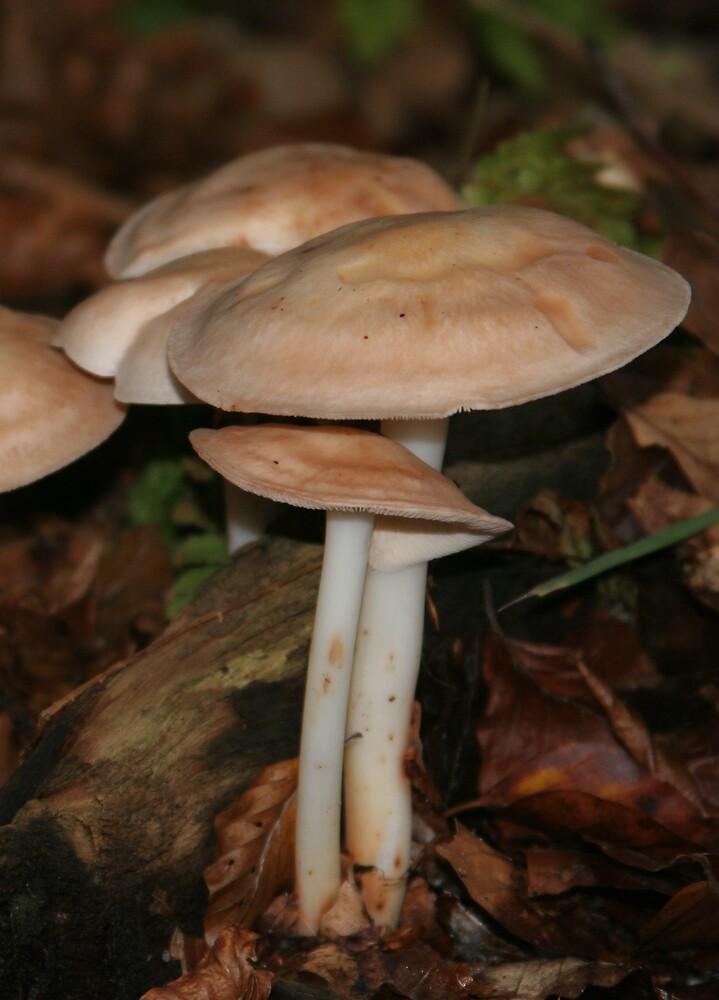 mushrooms by annie1