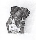 Tyson - graphite by Marlene Piccolin