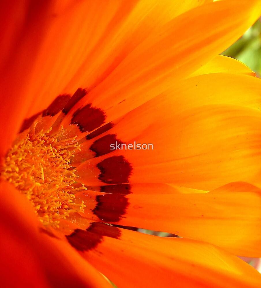 Sunburst by sknelson