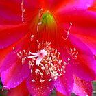 Favourite Flowers by Virginia McGowan