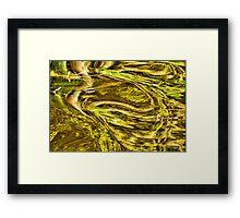 Natures Mirror Framed Print