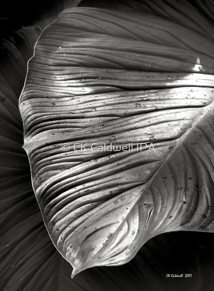 Silvertone Leaf by © CK Caldwell IPA