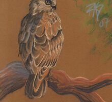 Rough-Legged Hawk by robertsloan2
