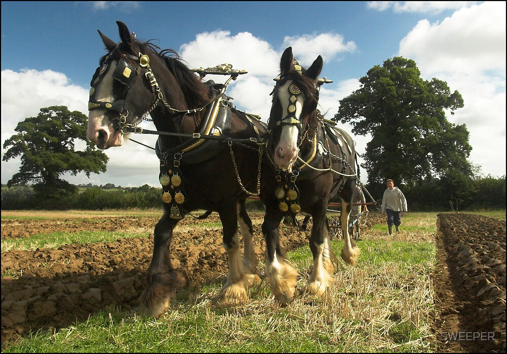 Horses Ploughing 2 by SWEEPER