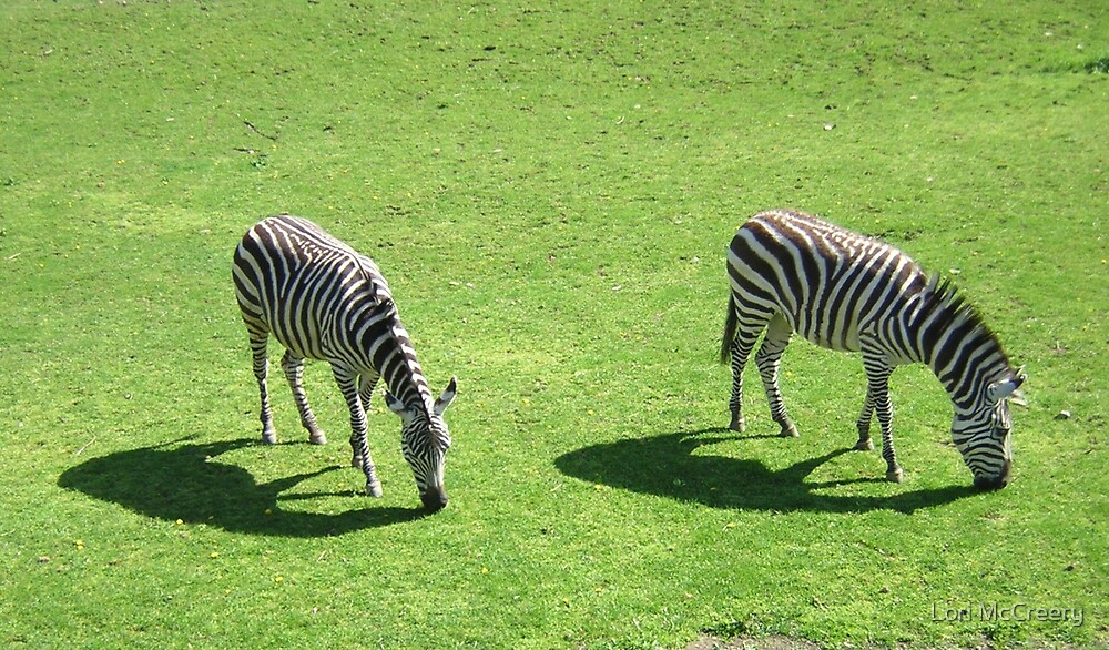 Two Zebras at the Zoo by Lori McCreery