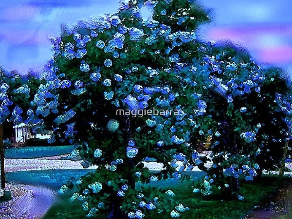 Blue Hydrangeas by maggiebarra