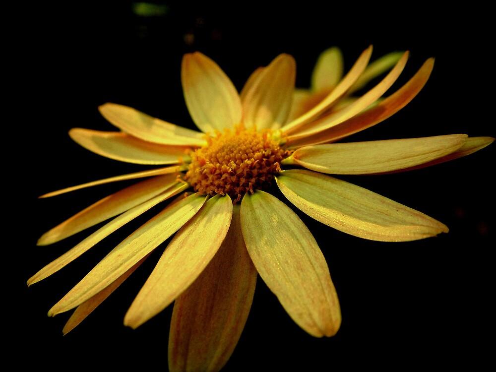 Yellow Sun by blingbling7