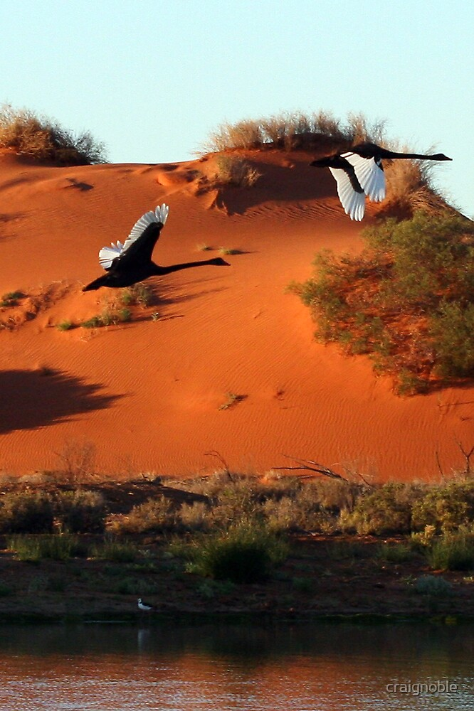 Desert Swans by craignoble