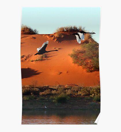 Desert Swans Poster