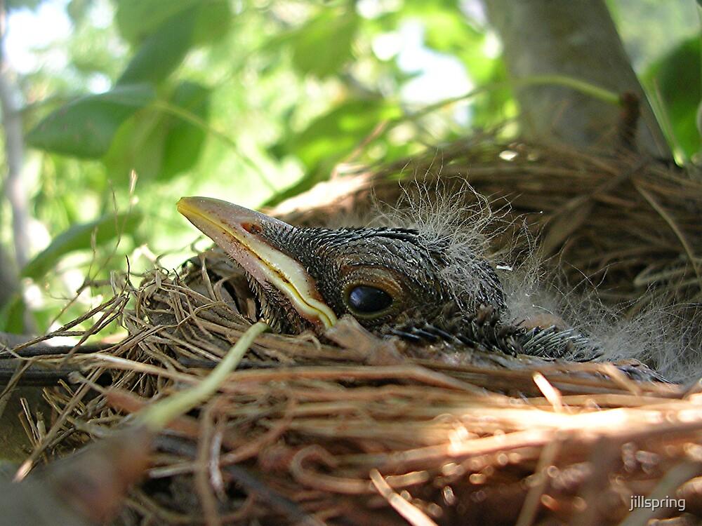 Baby Robin I by jillspring