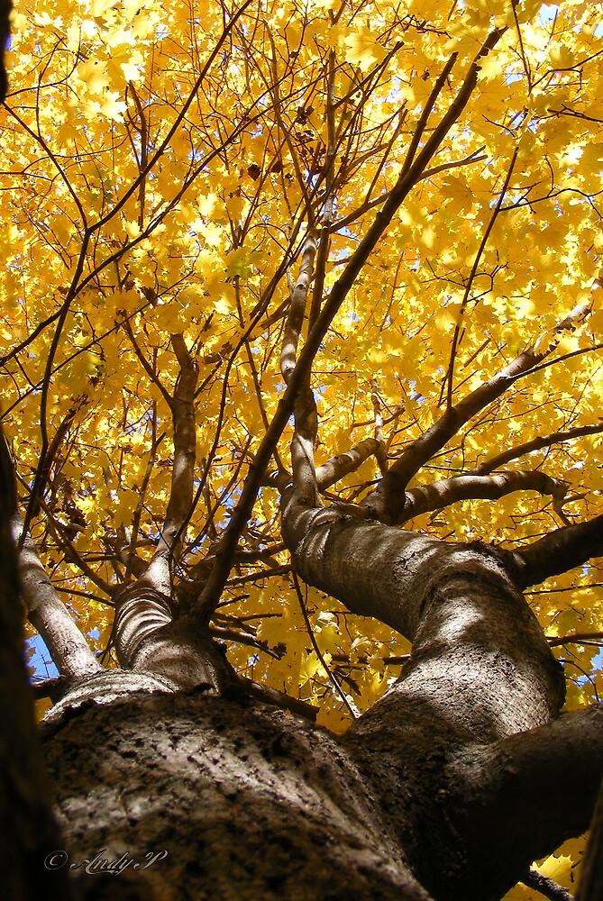 Autumn Vertigo by Andy2302