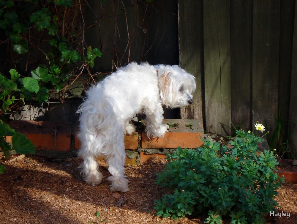 Pottering around the garden by Hayley
